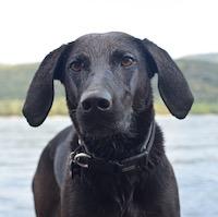 A Rám-szakadék kutyával