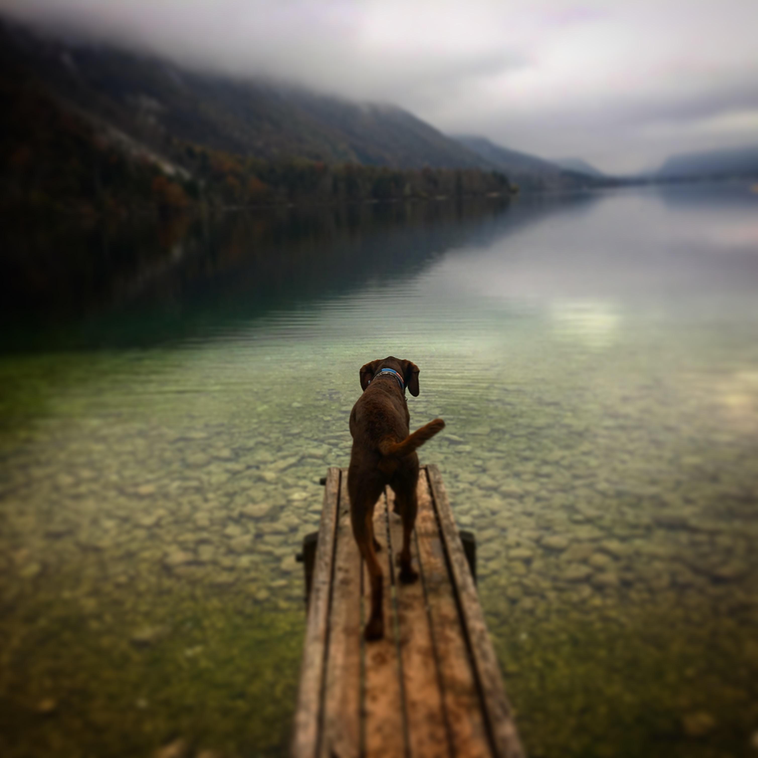 Kutyával Szlovéniában