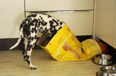 Josera, a finom kutyatáp