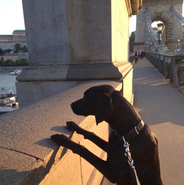 Tömegközlekedés kutyával